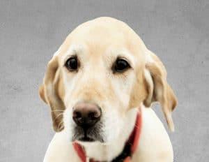 TOY          הכלב האהוב שלנו            TOY שלנו, כלב מעורב מסוג לברדור וגולדן, בעל נשמה טובה, מגיע בכל בוקר בחריצות למשרדי החברה, והפך לחלק בלתי נפרד משגרת היום במשרדי החברה.